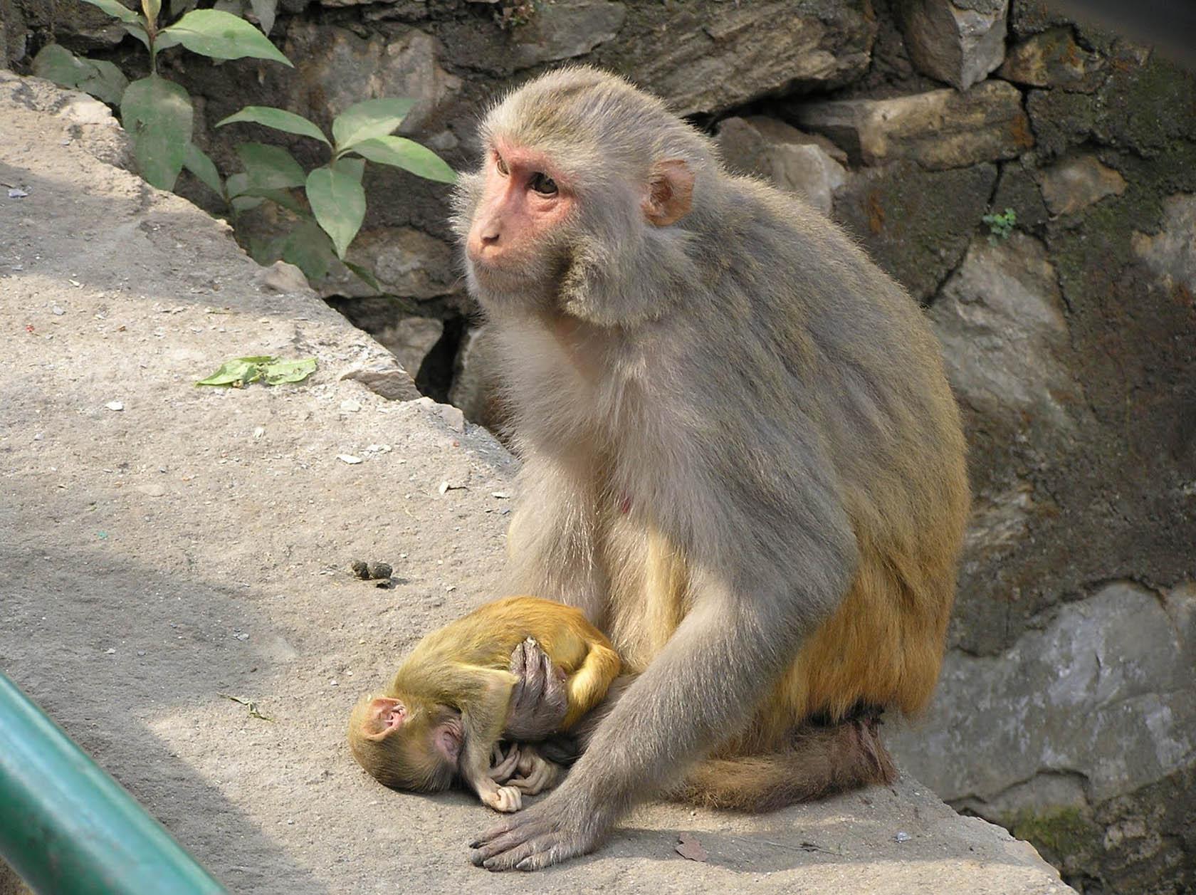 swayambhunath_day2_14